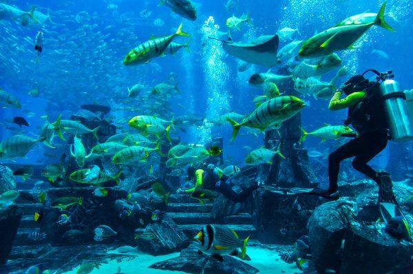 צלילה באקווריומים בדובאי